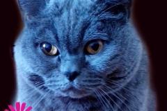 похороны кота