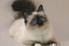 кремация кота